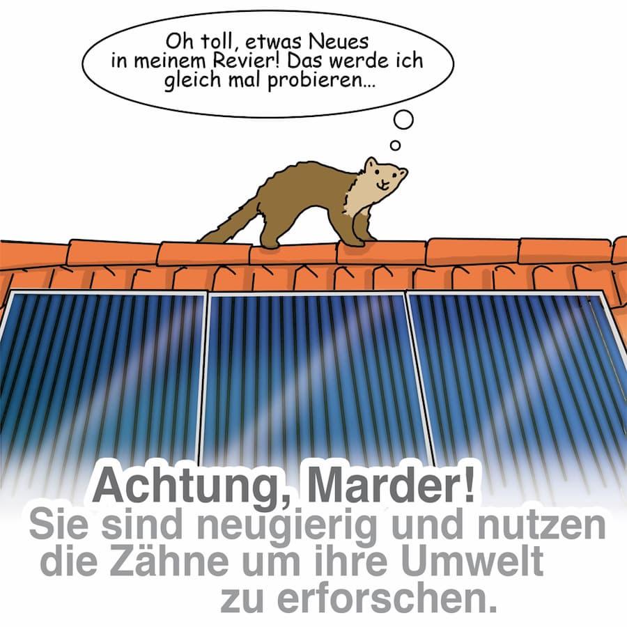 Marder können die Solarthermie-Anlage beschädigen